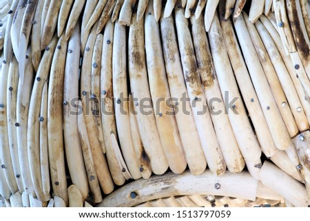 Elephant Ivory is a hard, white material from the tusks of Elephants that consists mainly of dentine, one of the physical structures of teeth and tusks.Trade of elephant ivory is illegal. #1513797059
