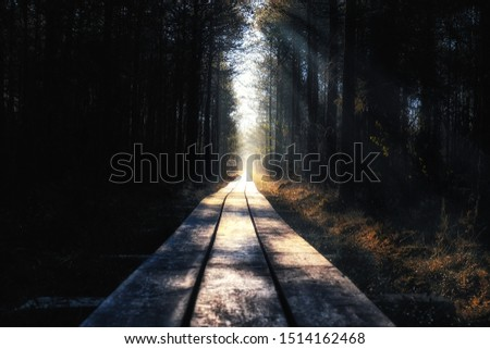 wooden road through the forest #1514162468
