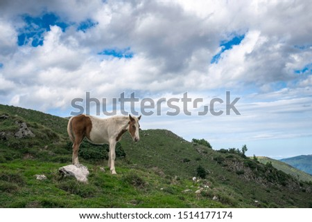 Horses in tne french Pyrenees mountains  #1514177174