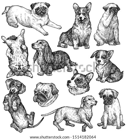 Set of hand drawn ink dogs sketches. Corgi, dachshund, pug. Decorative small breed. Vintage ink animals illustration. Isolated on white