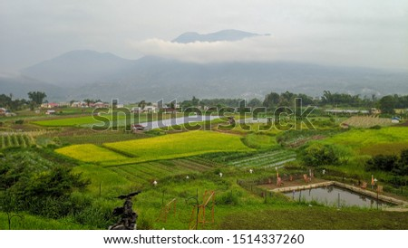rice field with singgalang mountain as the background. date taken : 3 march 2019. location : Nagari Aie Angek, Aie Angek, Sepuluh Koto, Tanah Datar Regency, West Sumatra 27151, Indonesia   #1514337260