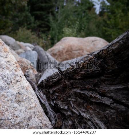 Fallen Tree in Rocky Mountain National Park #1514498237