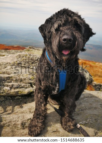 Dog at the summit of Camels Hump mountain. Hiking.  #1514688635