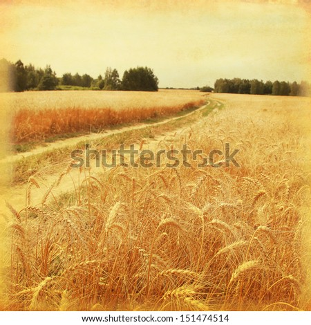 Country road in wheat field in grunge and retro style. #151474514