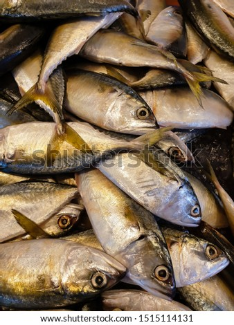 Many fresh mackerel Placed on a tray in a seafood market #1515114131