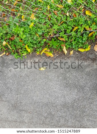 Up down asphalt and greenery. Greenery and dried leaves. #1515247889