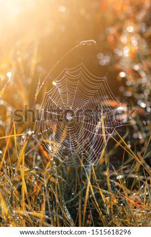 spider web in the autumn sun #1515618296