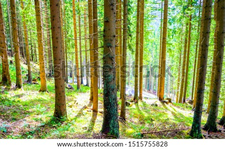 Forest trees sunlight shadows view. Forest trees sunlights. Forest trees background. Forest trees shadows #1515755828