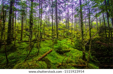 Deep mossy forest trees background. Mossy forest trees background. Forest trees deeply. Forest trees moss landscape #1515923954