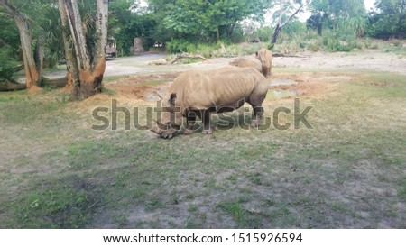 Animal Kingdom Safari Ride 2019 #1515926594