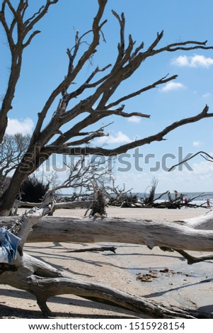 Botany Bay State Park 2019 #1515928154