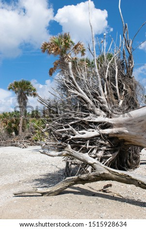 Botany Bay State Park 2019 #1515928634