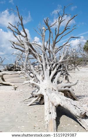 Botany Bay State Park 2019 #1515929387