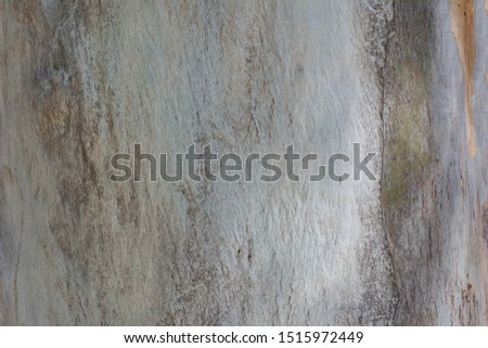 background smooth tree trunk without bark with clear pattern #1515972449