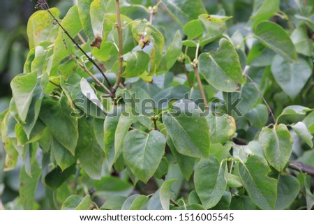 foliage foliage fruit fresh summer beautiful color #1516005545