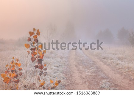 Beautiful autumn misty sunrise landscape with rural road. November foggy morning and hoary frost on the grass at scenic copse. Royalty-Free Stock Photo #1516063889