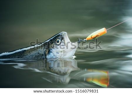 Bass fishing splash. Trout. Fishing. Still water trout fishing. Catching a big fish with a fishing pole #1516079831