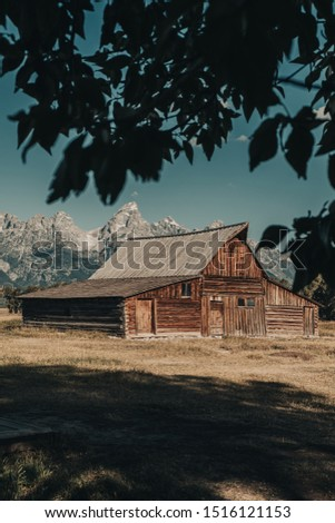 The Famous T.A. Moulton Barn through the tree leaves in the Historic Mormon Row District of Grand Teton National Park, WY, USA. The most photographed barn in America and took over 30 years to build. #1516121153
