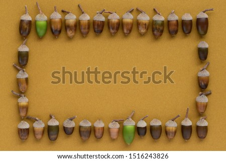 Acorns picture frame on a yellow ocher background