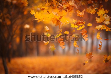 Falling maple leaves in the park. Bright gold autumn time. Abstract image, non focus. Copy space Royalty-Free Stock Photo #1516405853