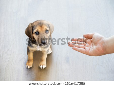 Pet owner's hand reaching out to give his dog a pill / tablet. #1516417385