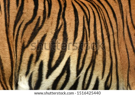 Tiger Print strip of skin pattern background  Royalty-Free Stock Photo #1516425440