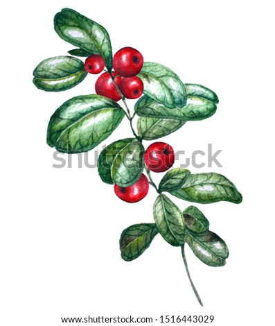 Watercolor illustration.  Cowberry isolated on a white background. #1516443029