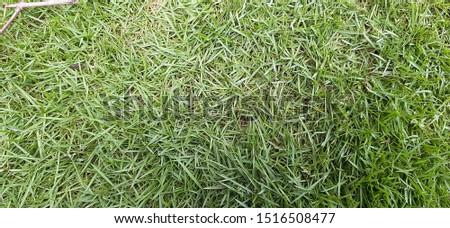 Beauty full Green grass lawn field texture #1516508477