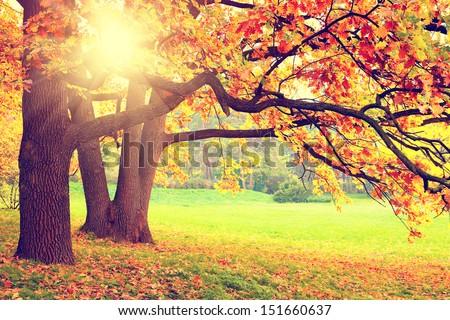 Autumn landscape #151660637