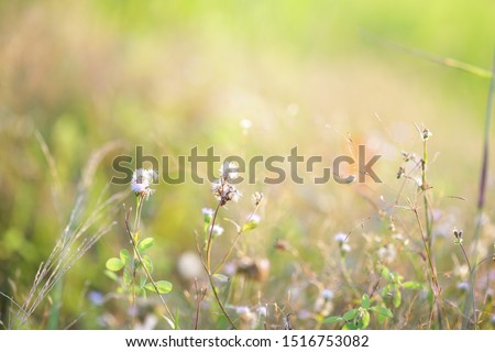 poaceae delicate flower glass background