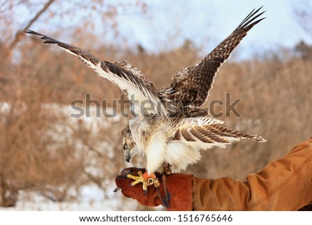 Red-tailed hawk The red-tailed hawk is a bird of prey that breeds throughout most of North America, from the interior of Alaska and northern Canada to as far south as Panama and the West Indies.  #1516765646