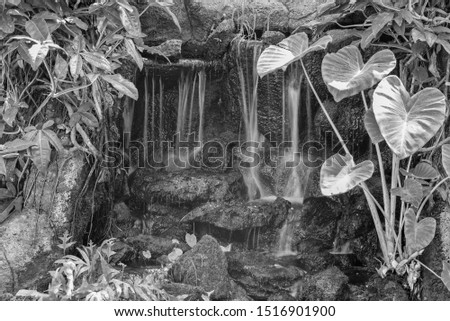Jungle Waterfall in Manoa Rainforest with Wild Taro Growing to Photo Right.  Ad cover or template for you environmental message.