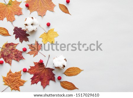 Autumn composition. Frame made of cotton flowers, dried  leaves on white background. Autumn, fall concept. Flat lay, top view, copy space #1517029610