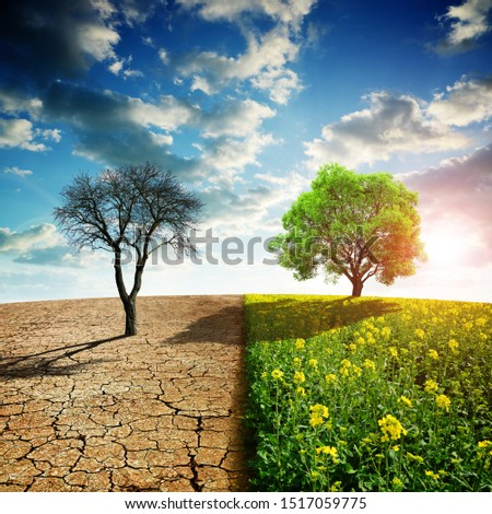 Dry country with cracked soil and rapeseed field with green tree. Concept of change climate or global warming. #1517059775