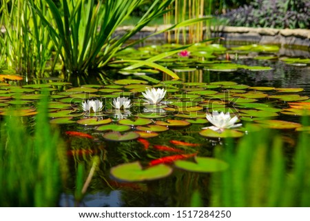 Homemade pond with fish and flowers
