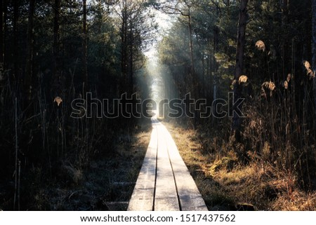 wooden road through the forest #1517437562