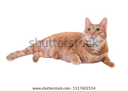 Red cat lies and looks up, isolated on a white background #1517602154