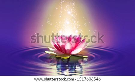 image of a lotus flower on the water closeup