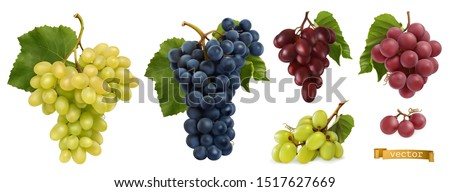 Wine grapes, table grapes. Fresh fruit. Miscellaneous 3d realistic vector objects. Food icon set #1517627669