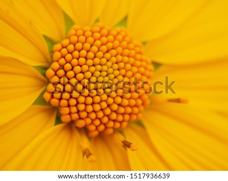 Marigold is a beautiful flower. With a glittering yellow color #1517936639