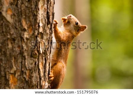 Squirrel on tree #151795076