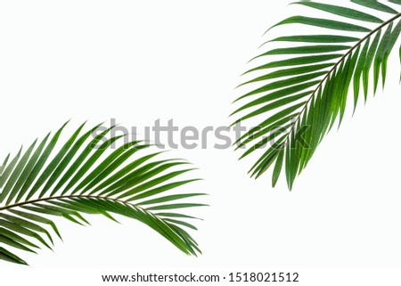 tropical coconut leaf isolated on white background, summer background #1518021512