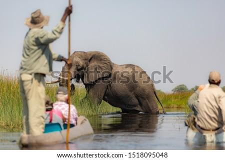 Exiting the Okavango Delta in Botswana  by mokoro