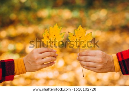 The guy and the girl are holding maple leaves in their hands. couple covers their faces with yellow maple leaves. Stylishly dressed guy and girl. The guy and the girl in red jackets in yellow forest. #1518102728