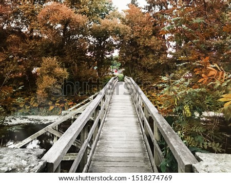 Wood Bridge in the Forest, Orange/Green Colored Plants and the River