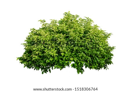 Tropical plant flower bush tree isolated on white background with clipping path #1518306764