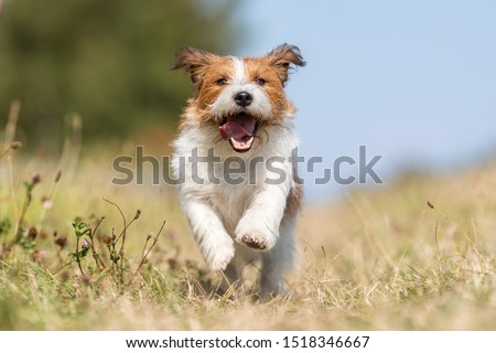 Portrait of a happy dog #1518346667