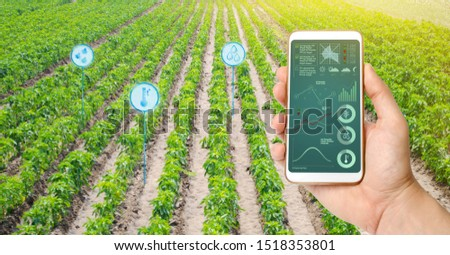 Farmer hold a smartphone on a background of a field with a pepper plantations. Agricultural startup. Automation and crop quality improvement. High technology, innovation. Scientific research. #1518353801