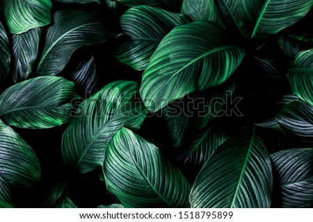 abstract green leaf texture, nature background, tropical leaf #1518795899