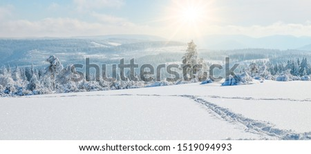 winter wonderland - panorama of snowy landscape with sunshine in the black forest #1519094993